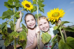 Sunflowers-Foy-sisters