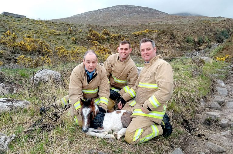 Members of Fire and Rescue Service come to the aid of new-born foal