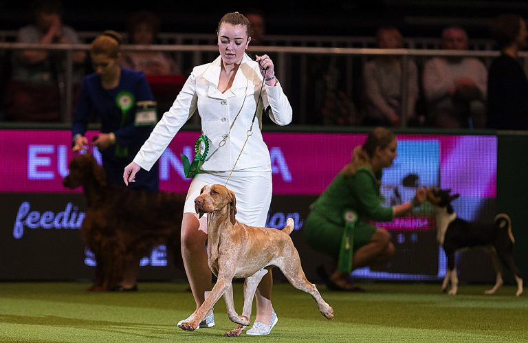 Locals to compete at world-famous dog show Crufts