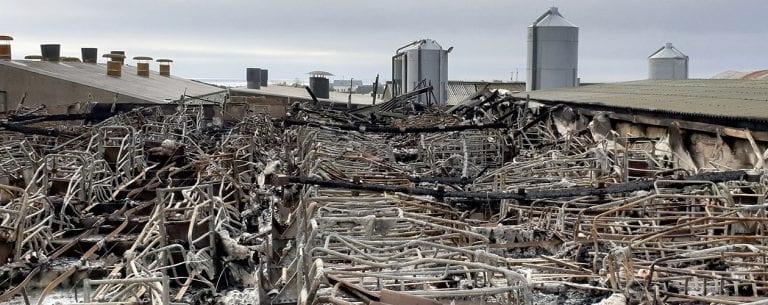 Kilkeel pig breeder 'totally devastated' by inferno on farm