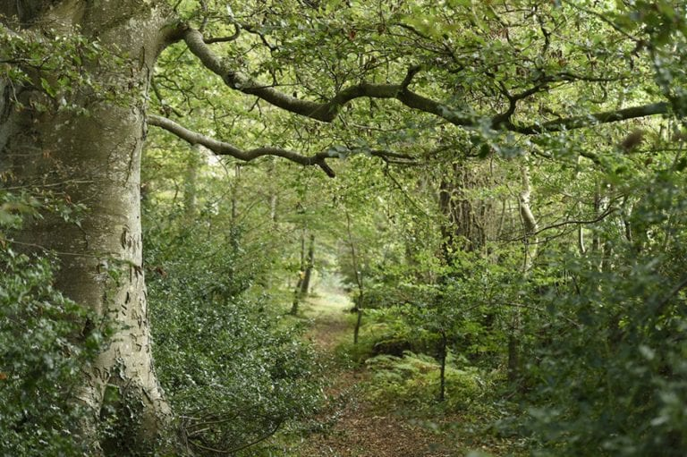 Ancient woodland bought by conservation charity