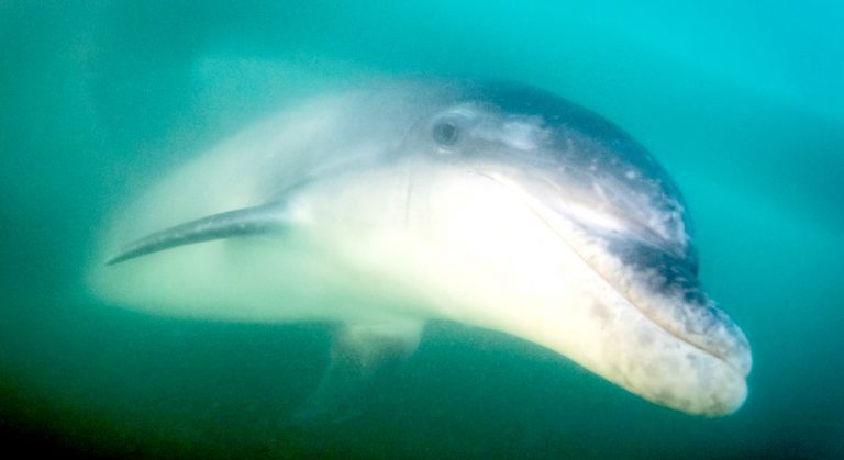 Appeal for dolphin to be left in peace